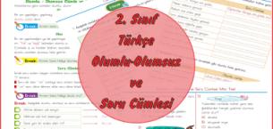 2. Sınıf Türkçe Olumlu-Olumsuz ve Soru Cümlesi